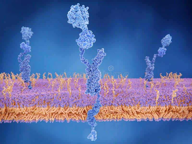 Амилоидоподобный протеин прекурсора бесплатная иллюстрация