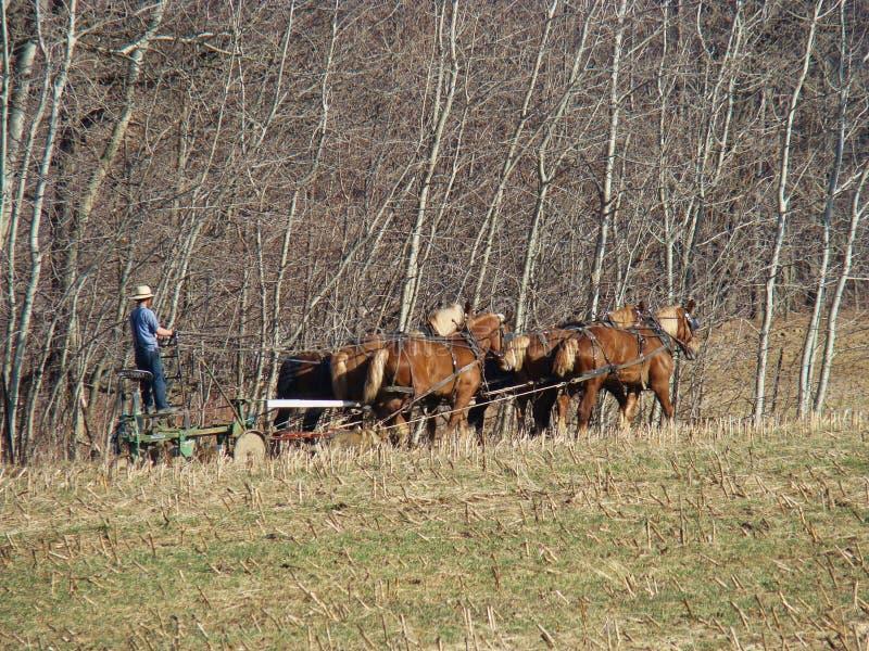Амиши вспахивая поле весной стоковое фото rf
