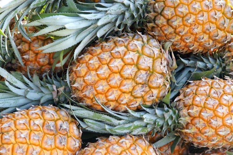 ананасы стоковое изображение