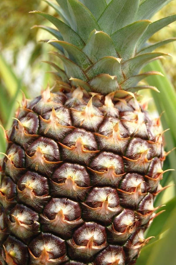 Download ананас стоковое фото. изображение насчитывающей листья - 6856504