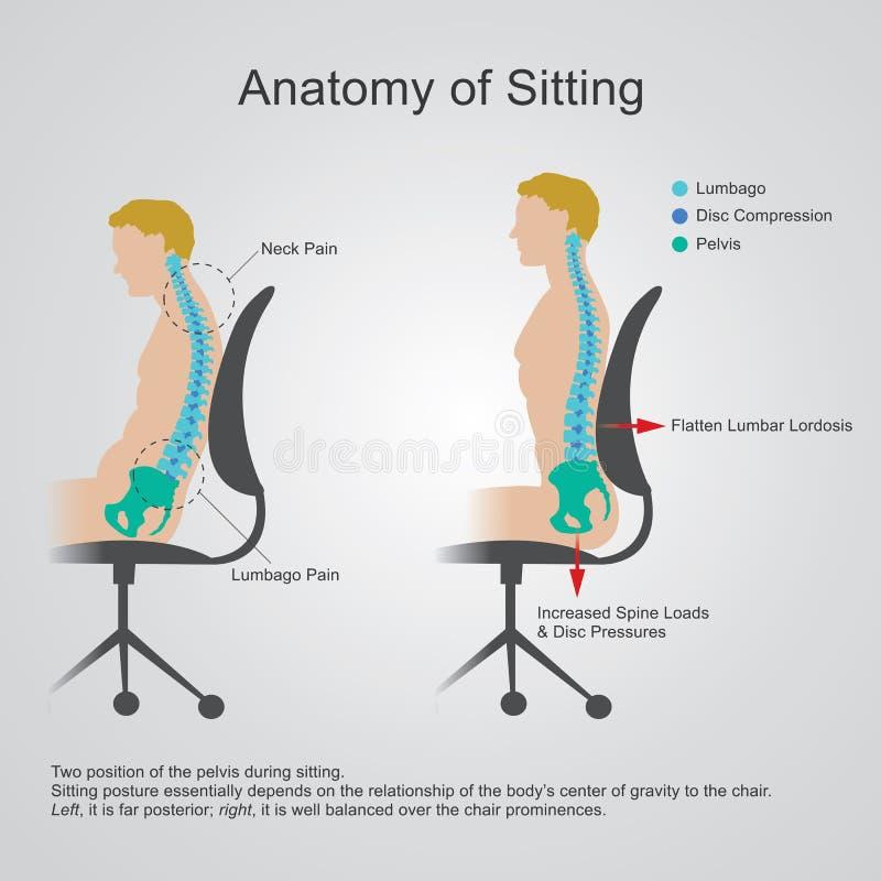 Анатомия сидеть бесплатная иллюстрация