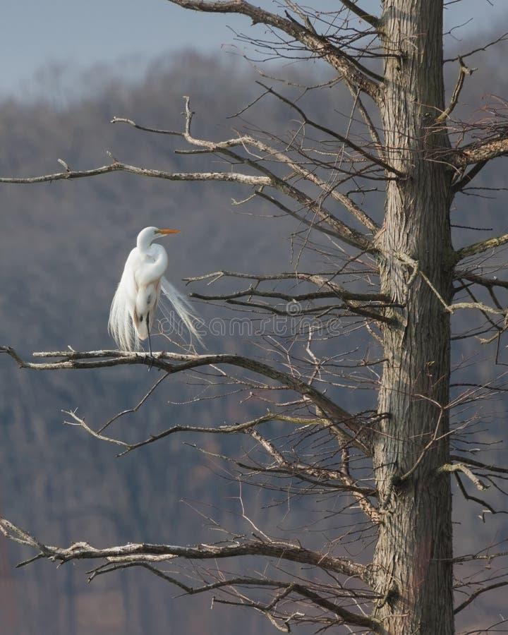 Ангел в дереве стоковые изображения