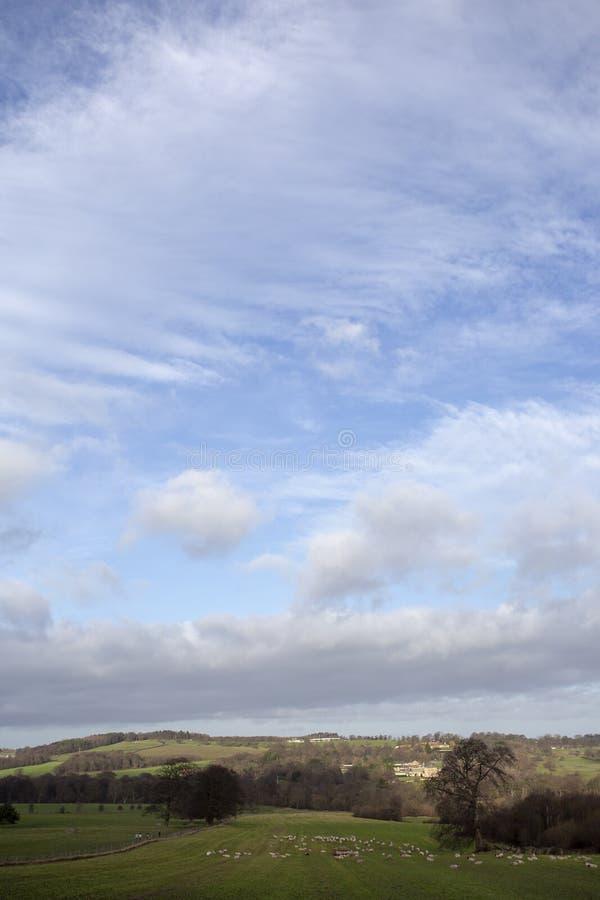 Английский ландшафт страны с овцами поля травы и большим голубым облачным небом стоковое изображение rf