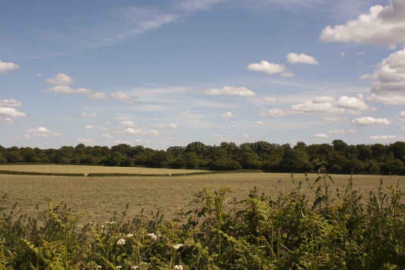 Английская сельская местность, зеленый цвет Holmer, Buckinghamshire стоковое фото