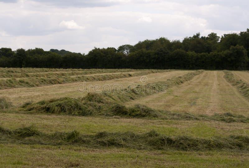 Английская сельская местность, зеленый цвет Holmer, Buckinghamshire стоковое изображение rf