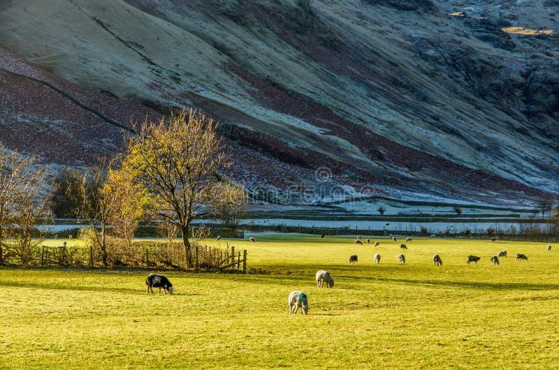 Английская сельская местность района озера около Langdale, Великобритании стоковое фото