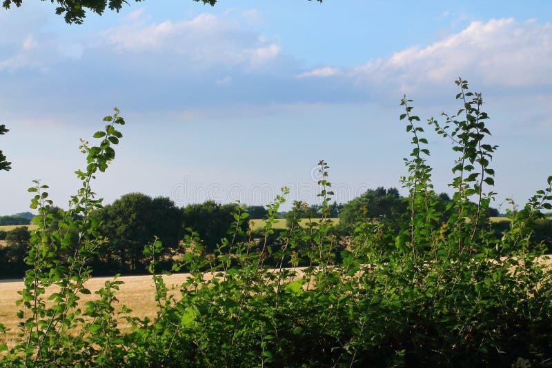 Английская сельская местность, сельская сцена, красивый ландшафт стоковые изображения