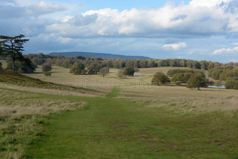 Английский ландшафт parkland стоковое фото rf