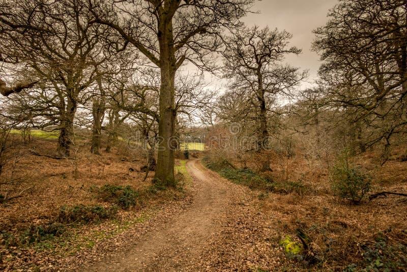 Английский сценарный ландшафт в утре на Felbrigg, Норфолке стоковое изображение