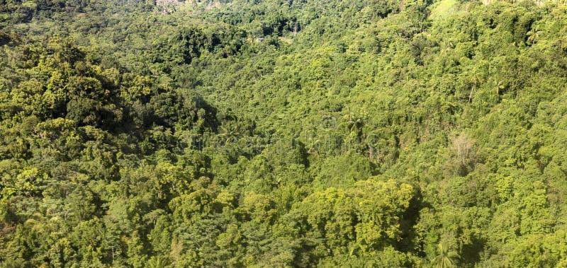 Антенна джунглей, побережья и океана в Доминике стоковые фотографии rf