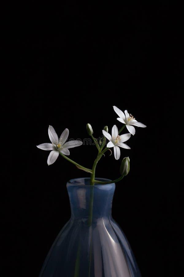Античная голубая ваза с ветвью малых белых цветков стоковые изображения rf