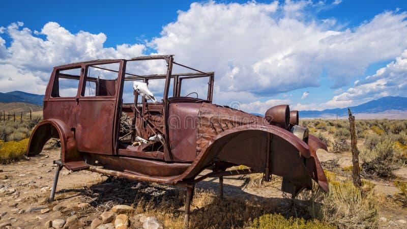 Античный череп автомобиля и коровы в большем национальном парке таза, n стоковые фото