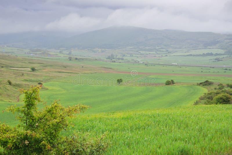 ландшафта фокуса поля дня облаков сини небо выставки заводов движения должного польностью зеленого маленькое не некоторые скачут  стоковое изображение rf
