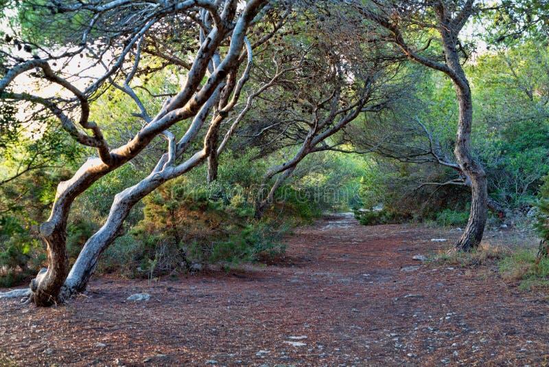 ландшафт пущи дня солнечный мистическо Ветви дерева гнуть над PA леса стоковая фотография rf