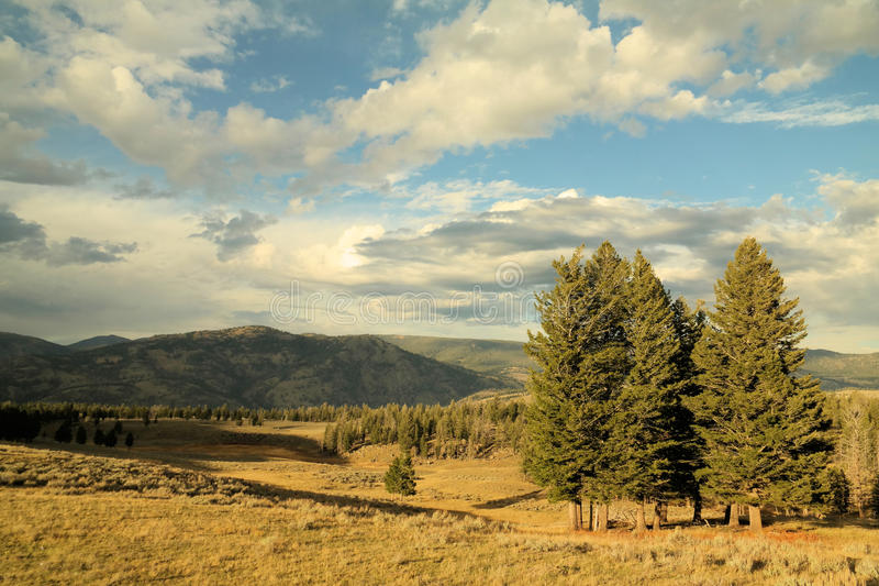 ландшафт пущи дня солнечный стоковая фотография