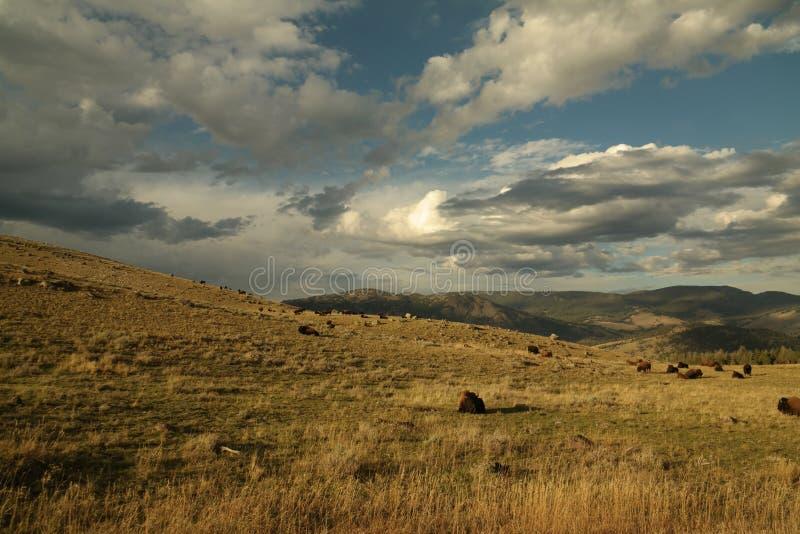ландшафт пущи дня солнечный стоковое изображение rf