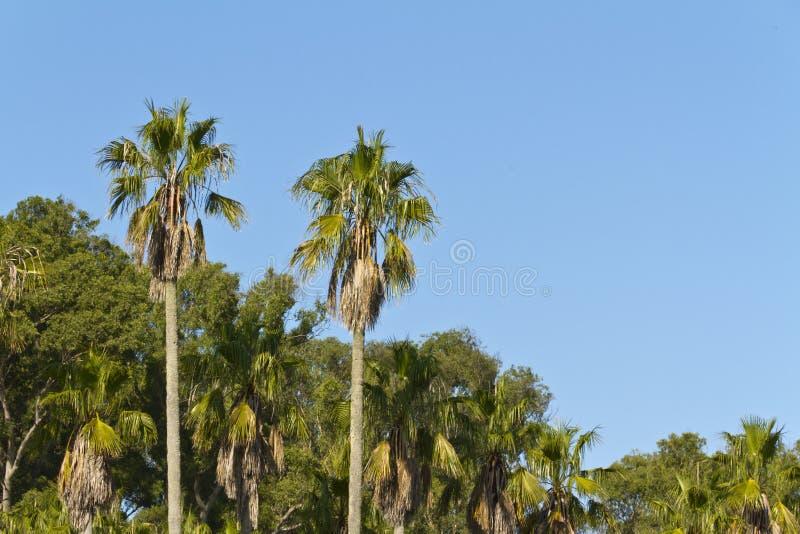 ландшафт тропический стоковые изображения rf