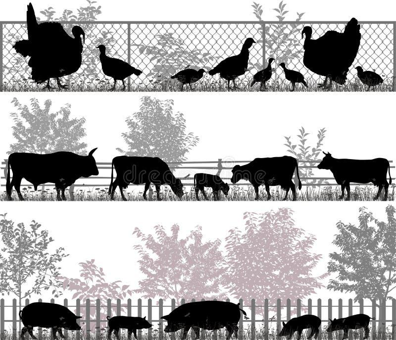 ландшафт фермы животных лето много sheeeps иллюстрация вектора