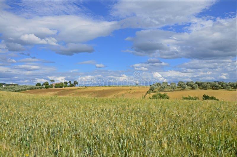 ландшафт tuscan стоковое изображение