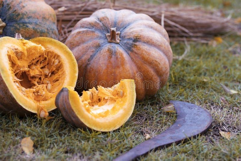 Апельсиновые тыквы на открытом фермерском рынке заплатка для тыквы стоковые фотографии rf