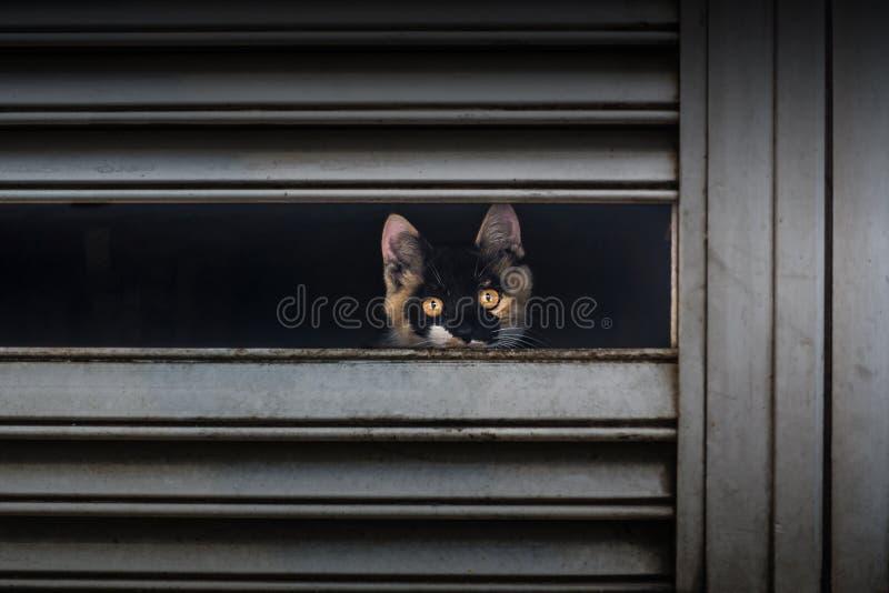 Апельсин-наблюданный кот стоковое фото