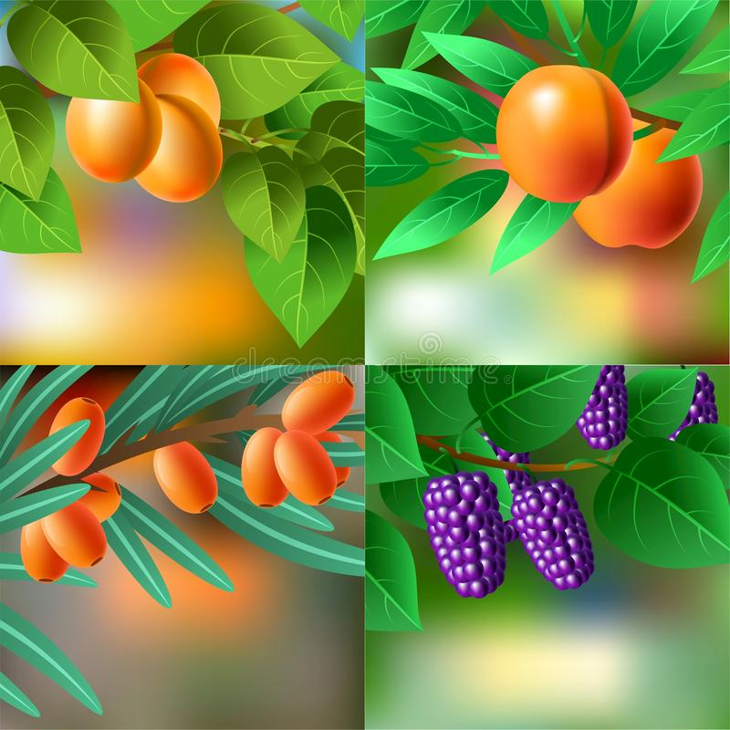 Апельсин, сочные, сладостные абрикосы на ветви для вашего дизайна иллюстрация штока