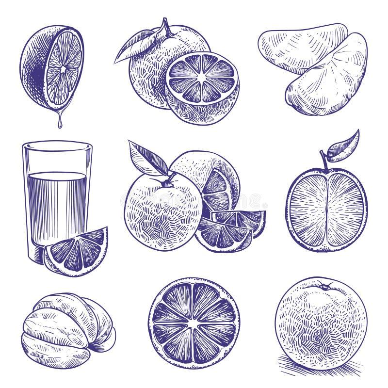 Апельсин эскиза Рисуя выгравированные апельсины, ботанический цитрус, цветок и листья Тропическая упаковка ярлыка сока r иллюстрация штока