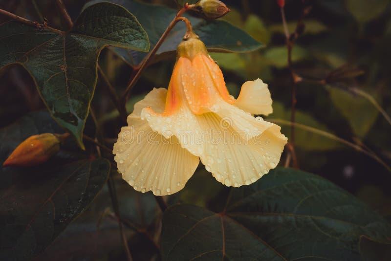 Апельсин цветка стоковое фото