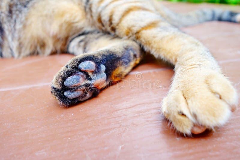 лапки s кота стоковая фотография