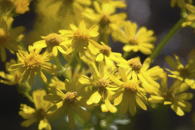 Аппалачские Wildflowers Ragwort - anonyma Packera стоковая фотография rf