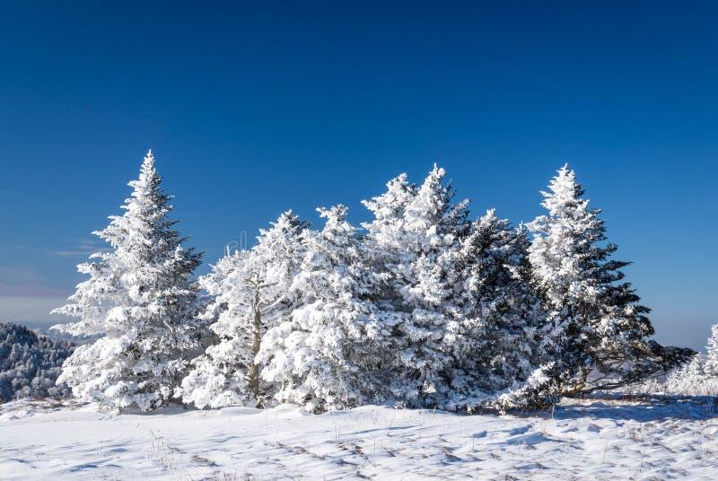 Аппалачский поход зимы следа стоковые фото
