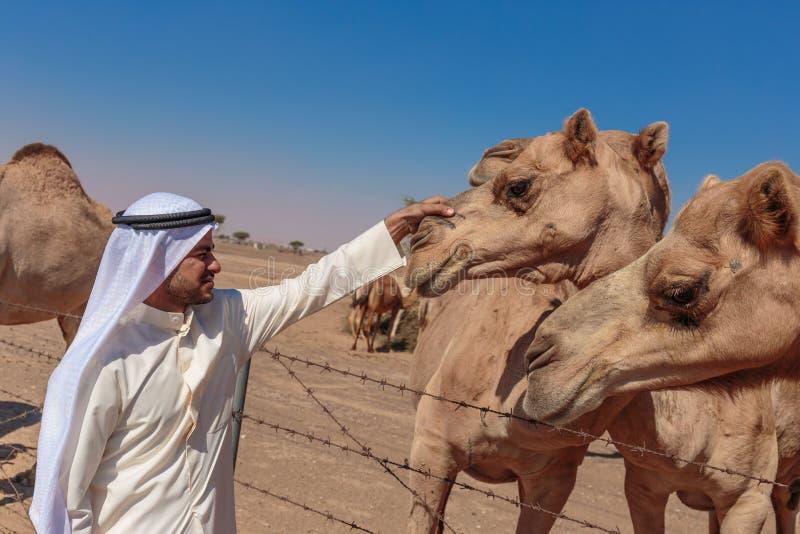 Арабские люди и верблюды на ферме стоковая фотография