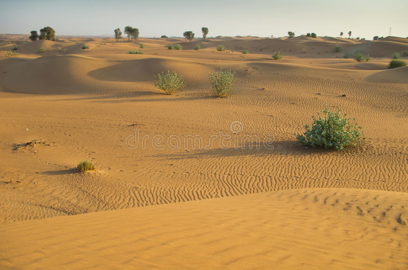 Аравийская пустыня стоковые изображения