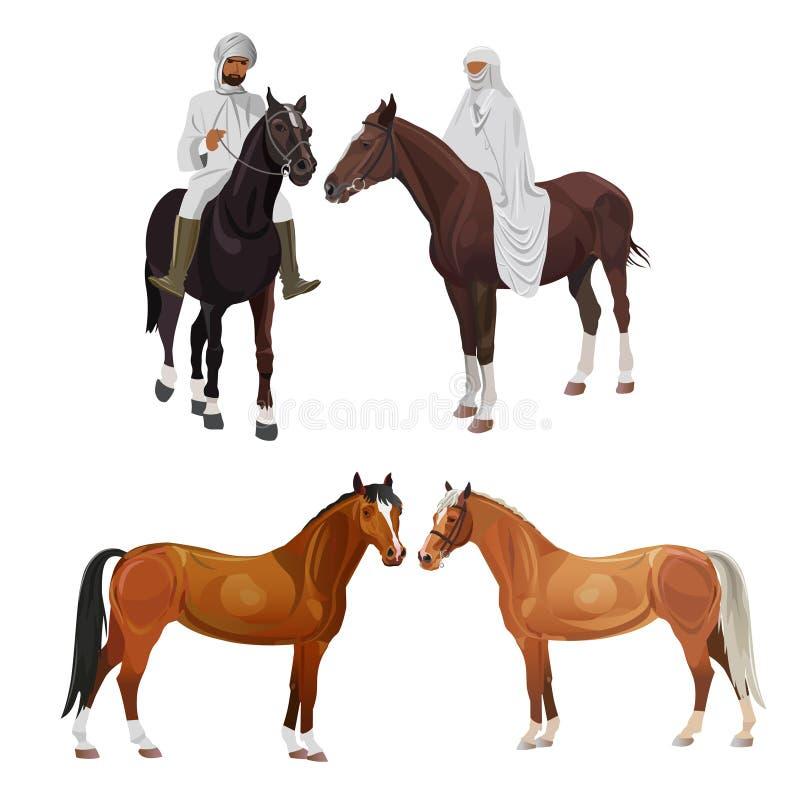 Аравийские всадники и лошади иллюстрация штока