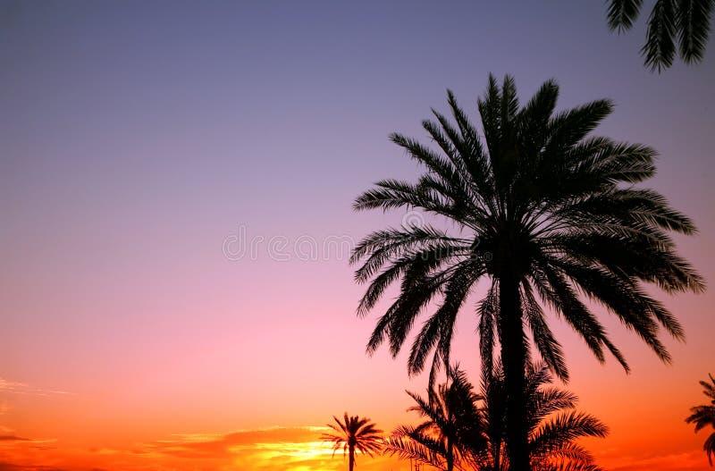 аравийский заход солнца стоковое фото