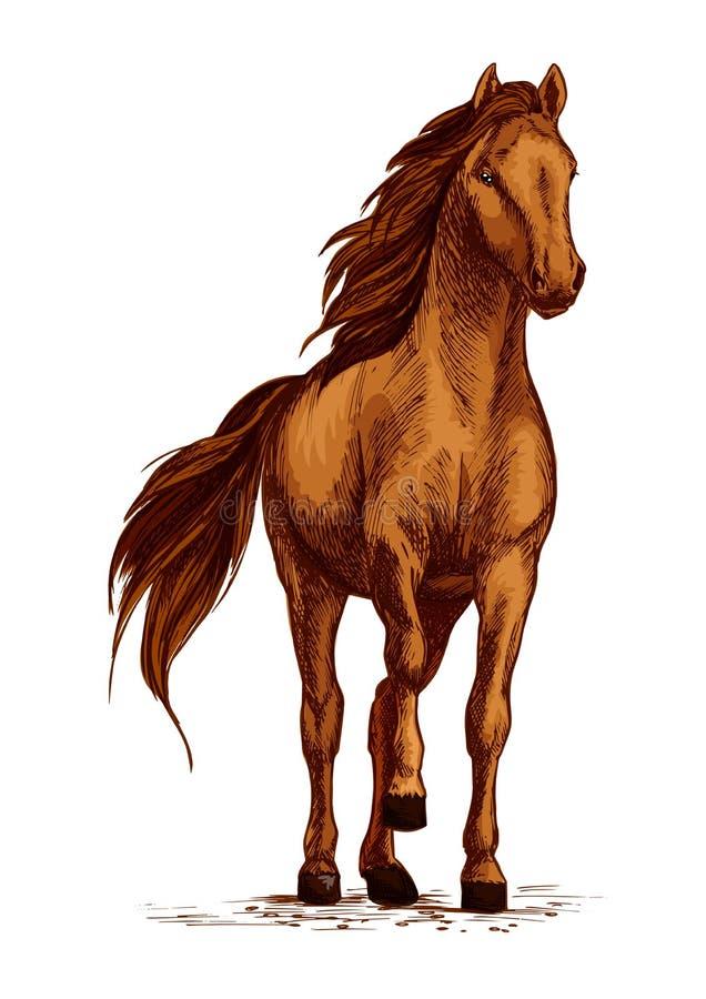 Аравийский коричневый эскиз вектора копыта stomping лошади иллюстрация вектора