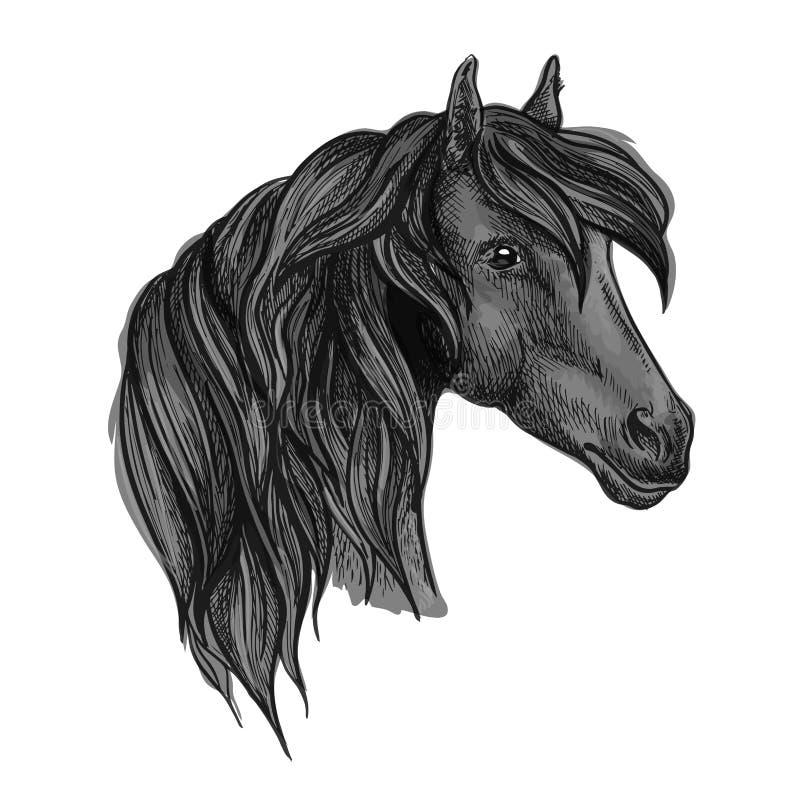 Аравийский эскиз головы лошади для equine дизайна спорта иллюстрация штока