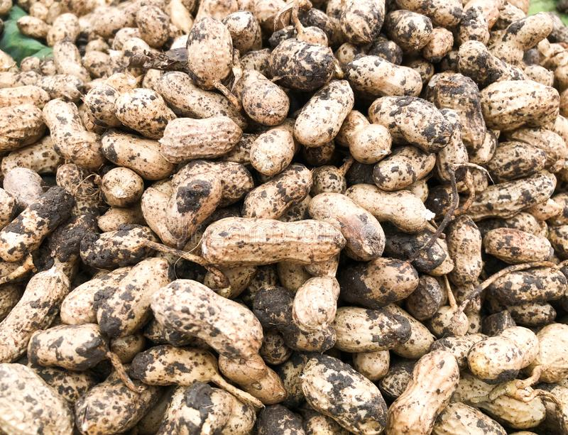 Арахисы арахиса стоковые фото