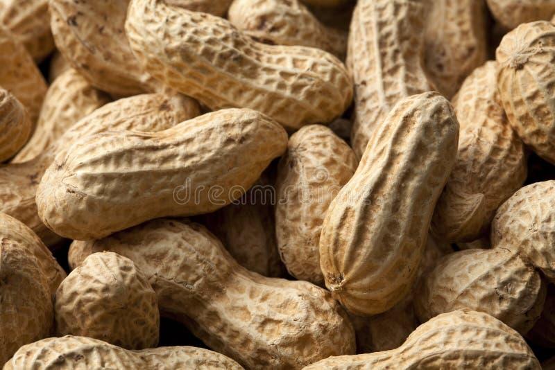арахисы стоковое фото