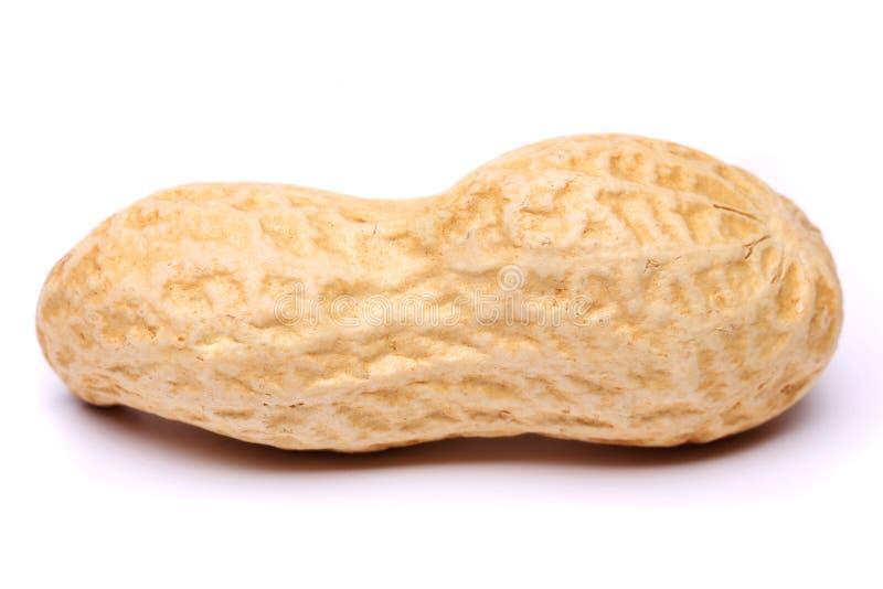 Арахис изолированный на белом конце предпосылки вверх стоковые фото