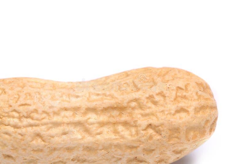 Арахис изолированный на белом конце предпосылки вверх стоковые фотографии rf