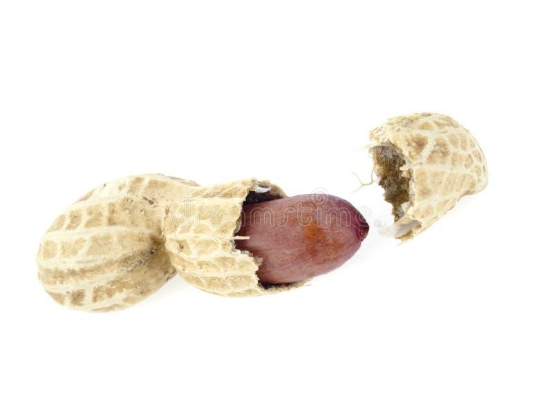 арахис стоковое изображение rf