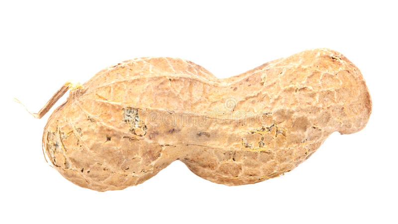 арахис стоковое фото