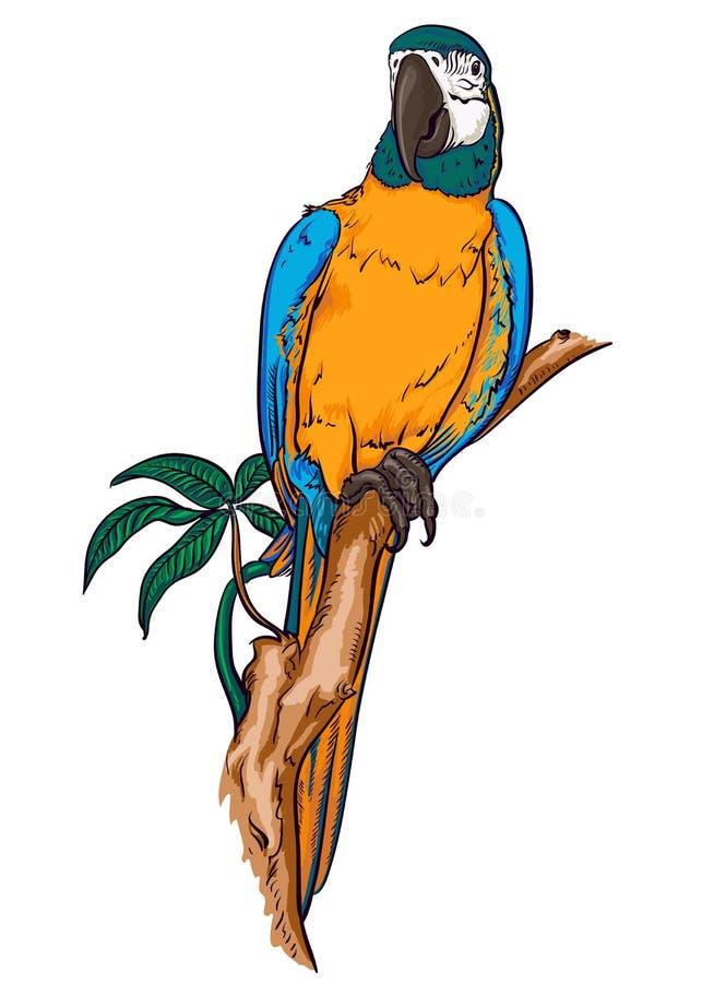 Ара попугая на ветви иллюстрация вектора