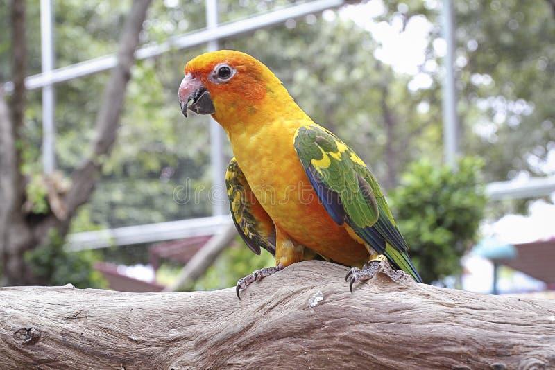 Ара птиц стоковые изображения rf