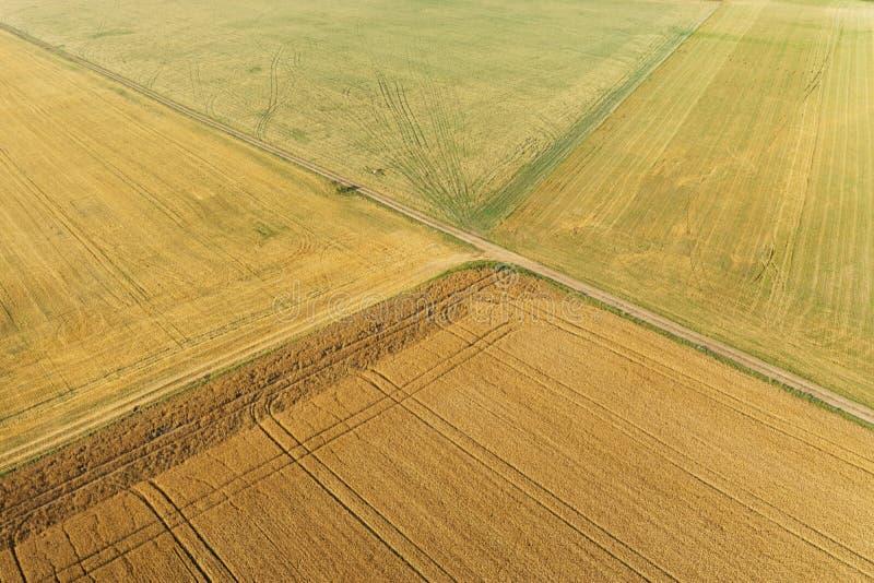 Ареальный взгляд кукурузного поля стоковые изображения rf