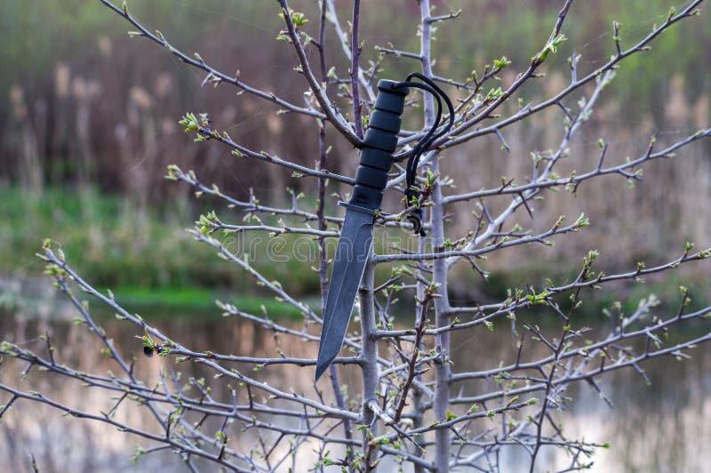 Армейский нож на ветвях дерева Нож на заходе солнца стоковые изображения