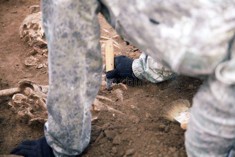 археологический землерой Руки археолога с инструментами проводя исследование на человеческих косточках, часть скелета от gro стоковые изображения