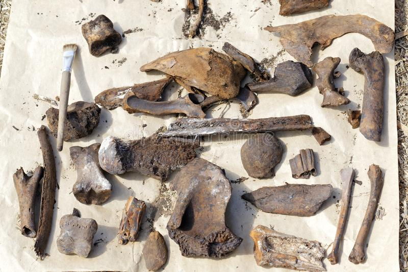 Археологический памятник старых животных высушен в естественных условиях на поверхности бумаги стоковое фото rf