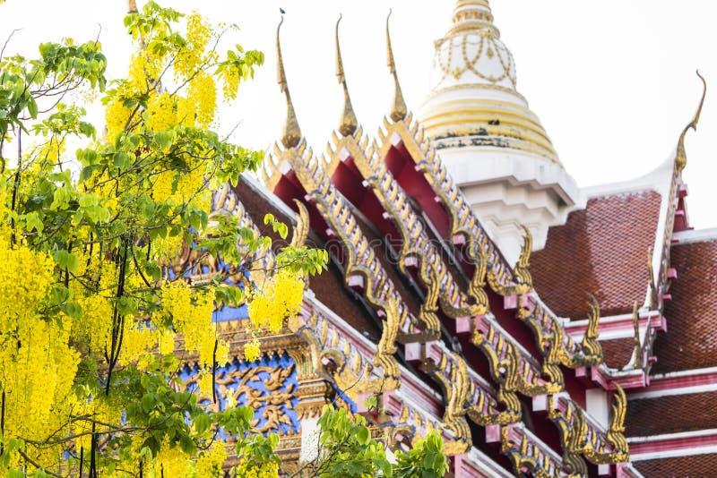 Архитектура виска в Таиланде с зацветать цветет во время времени весны стоковые фото